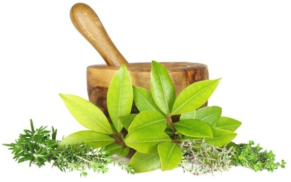 Herbal Medicines Manufacturer in India