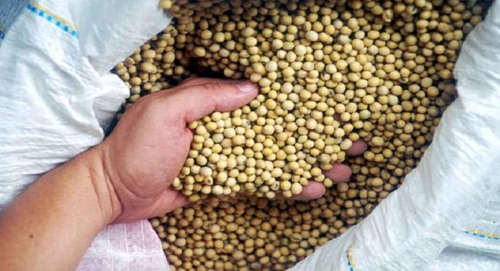 india-seed-coating-market
