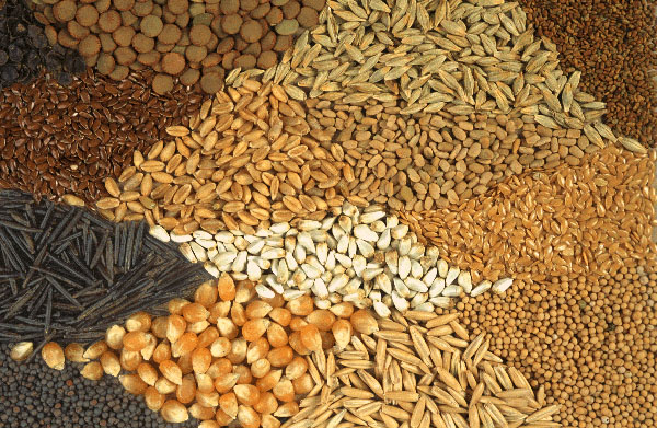 Rising Seed Production & Food Security Coupled with Sustainable Rice and Corn Production to Support Seed Sector in Philippines: KenResearch