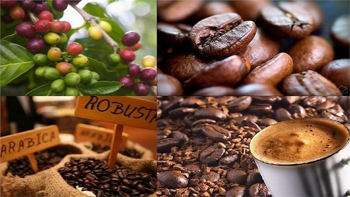 Vietnam Coffee Market Research Report