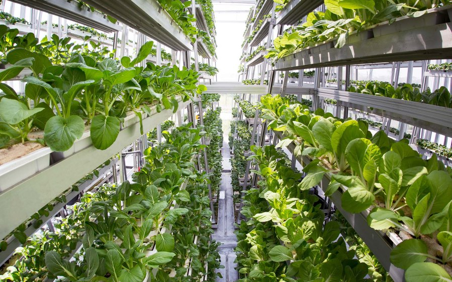 Vertical Farming – A Solution to Limited Land Availability in North America: KenResearch