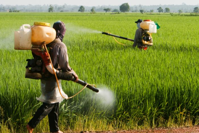 Revolution In China Herbicide Market With Real-Time Growth–Ken Research