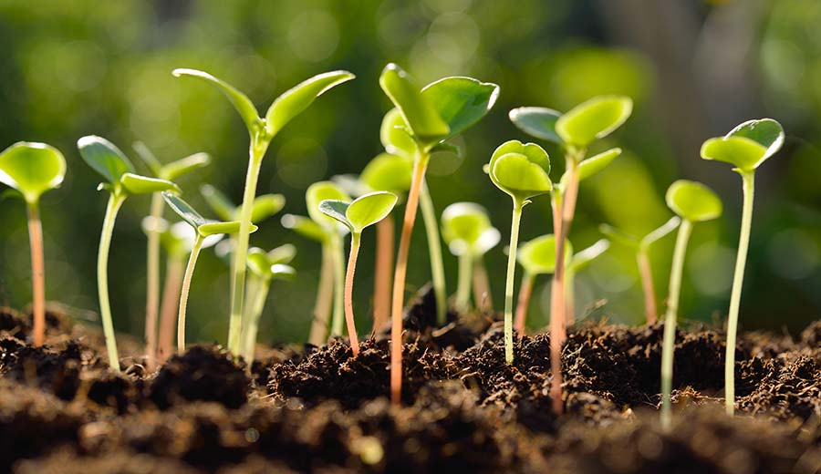 France Seed Market Will be Led by R&D on Newer Varieties of Seeds, Increase in Demand for French Seeds in the European Market and Increase in Organic Farming Sector in the Country: KenResearch