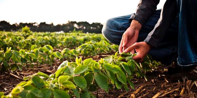 Poland Crop Protection Market Research Report to 2022: Ken Research