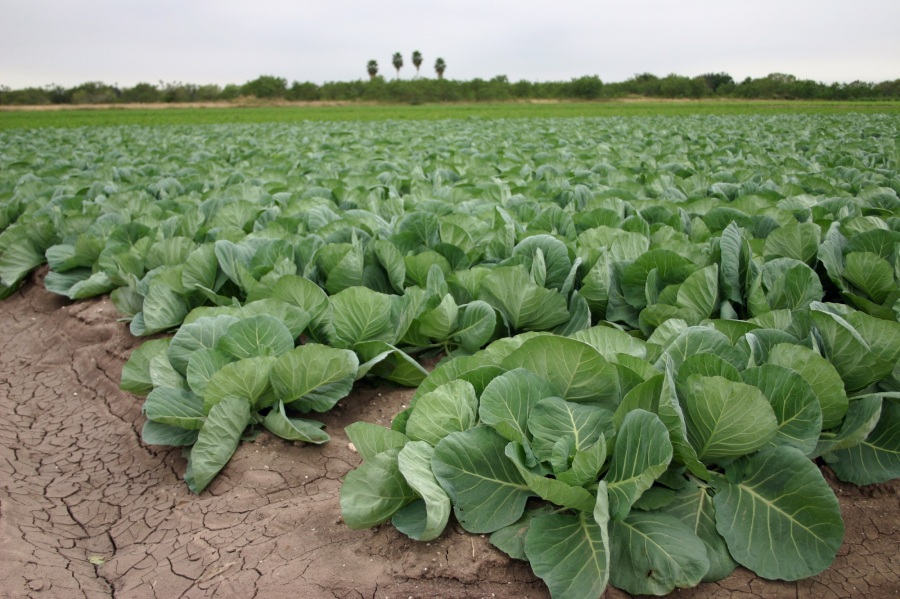 Steady demand for fresh vegetables and increase in prices to encourage global vegetable farming industry: Ken Research