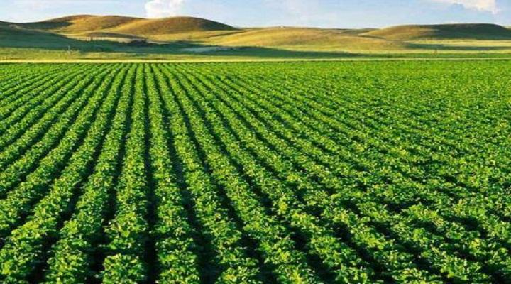 India Complex Fertilizer Market report – Kenresearch