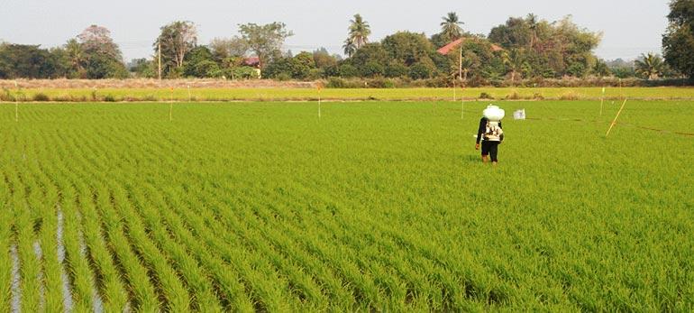 Thailand Complex (NPK) Fertilizer Market Outlook to 2022: KenResearch
