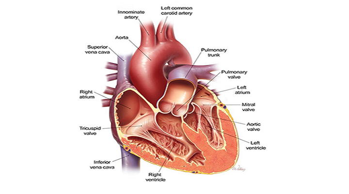 Cambridge University's Prosthetic Heart Valve To Reduce Need For Anticoagulants Market Outlook: Ken Research
