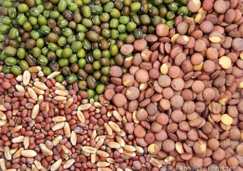 Dynamic Landscape Of Genetically Modified Crops Technology In The Seed Market Outlook : KenResearch