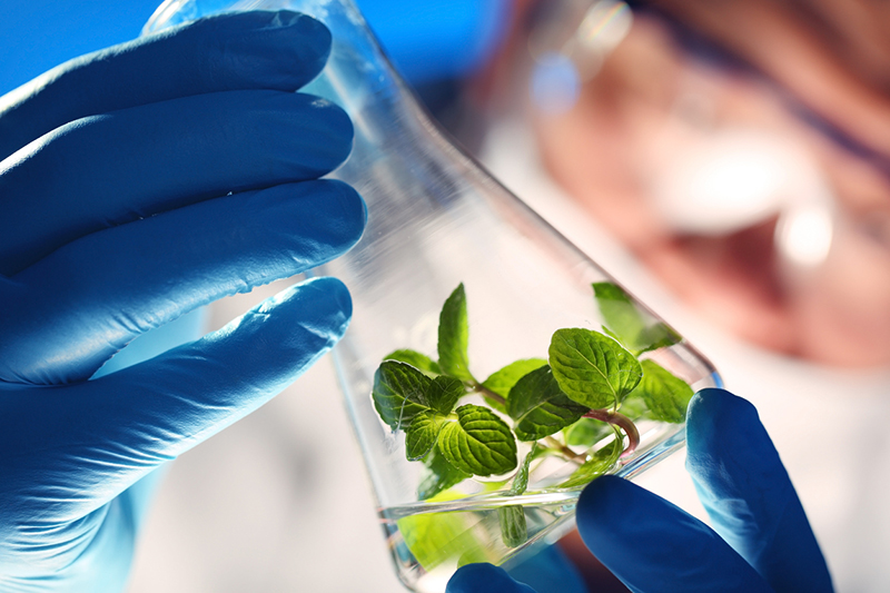 Wide Usage Of Bio Based Chemicals Globally Market Outlook: KenResearch