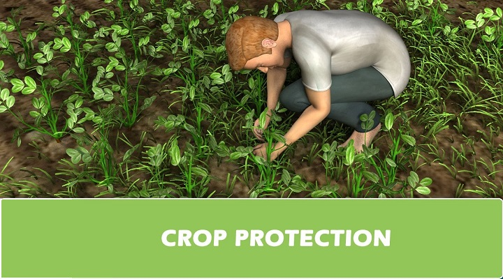 Advancements In The Global Crop Protection Market Outlook: Ken Research