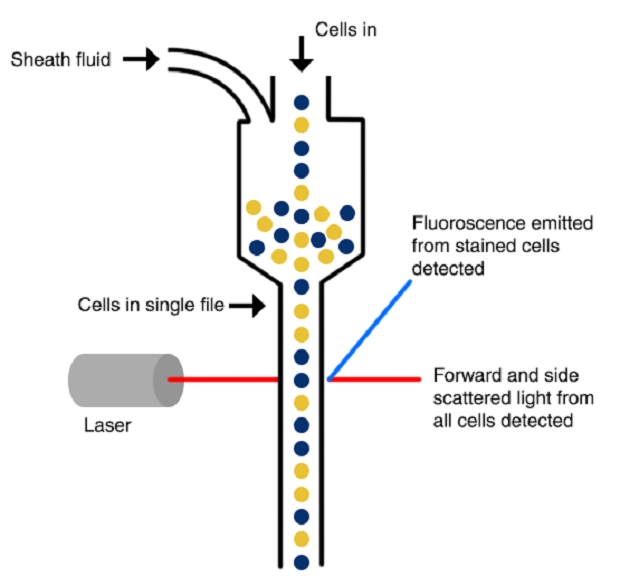 Dynamic Landscape of the Global Flow Cytometry Market Outlook: Ken Research