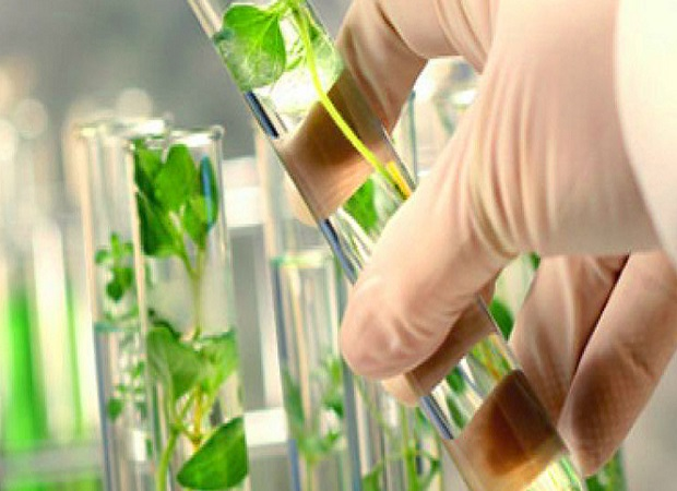 Dynamic Landscape of the Global Bio Succinic Acid Market Outlook: Ken Research