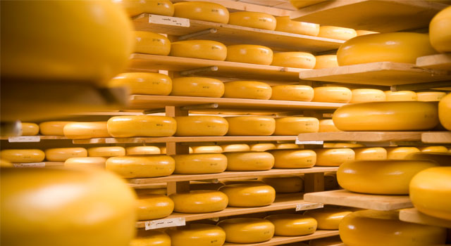 Global Cheese Manufacturing Market Outlook: KenResearch