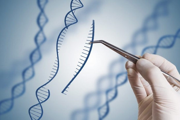 Developed Landscape of the Global Genome Editing Market Outlook: Ken Research