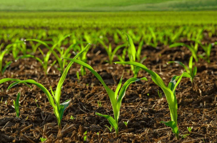 Global Crop Production Market