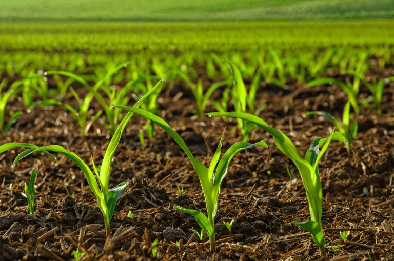 Developing Trends In The Crop Production Global Market Outlook: Ken Research