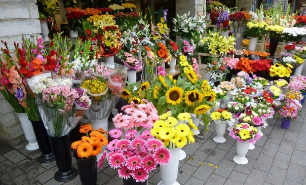 Rise in Number of Flower Cultivators Expected to Drive World Floriculture Market over the Forecast Period: Ken Research