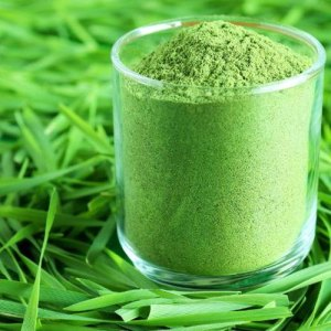 Global Wheat Grass Powder Market