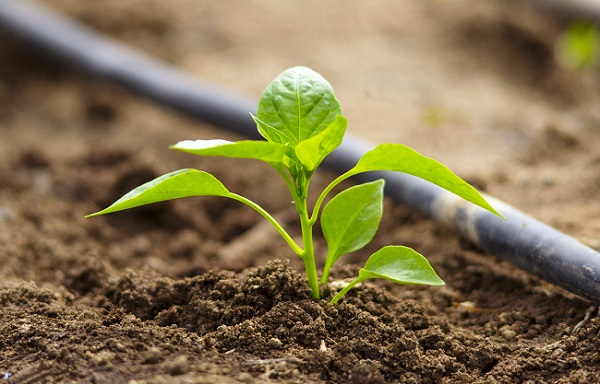 Increasing Use Of Fertilizers Acting As A Key Driver For Adoption Of Agricultural Chelates: Ken Research