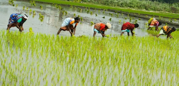 Increase in Consumption of Rice Anticipated to Drive Vietnam Rice-Paddy Industry: Ken Research