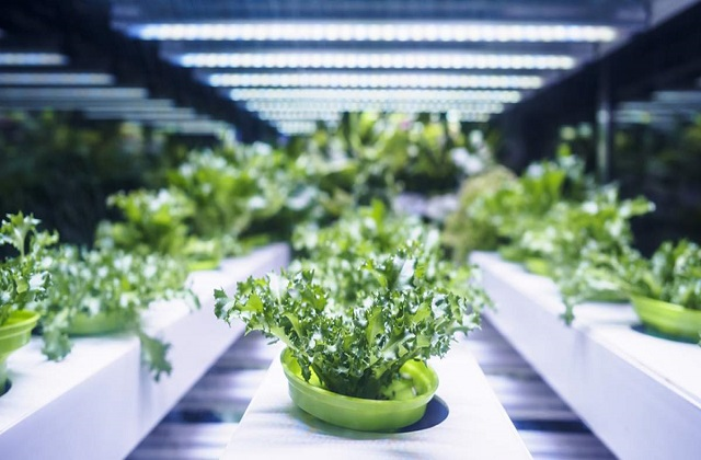 Different Trends in Worldwide Agricultural Biologics Market Outlook: KenResearch