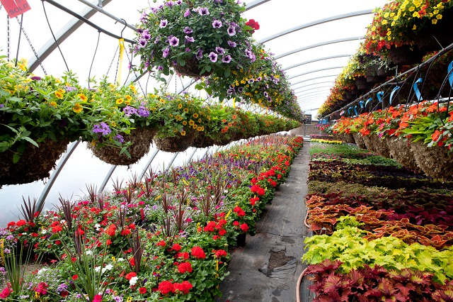 Augmenting Landscape of Greenhouse, Nursery, and Flowers Global Market Outlook: Ken Research