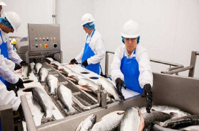 Global Seafood Manufacturing Market