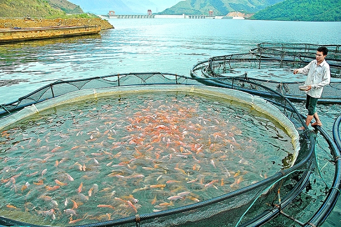 Extensive Advancement In Vietnam Fishery Market Outlook: KenResearch