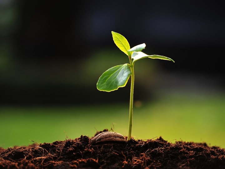 Growing Insights of Worldwide Seed Market Outlook: Ken Research