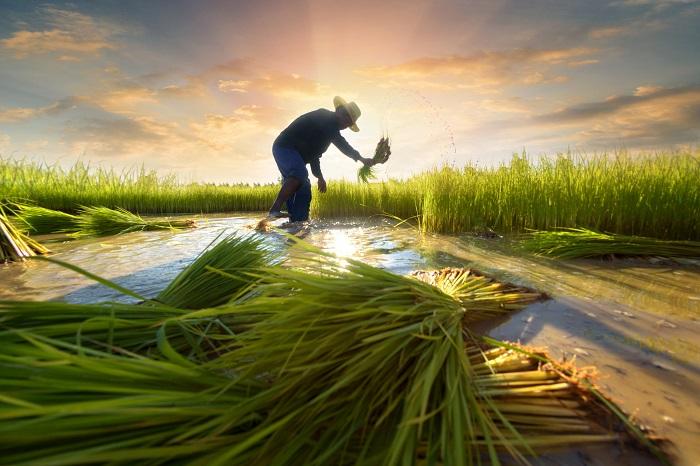 Sri Lanka Agriculture Market, Sri Lanka Agriculture Industry: KenResearch
