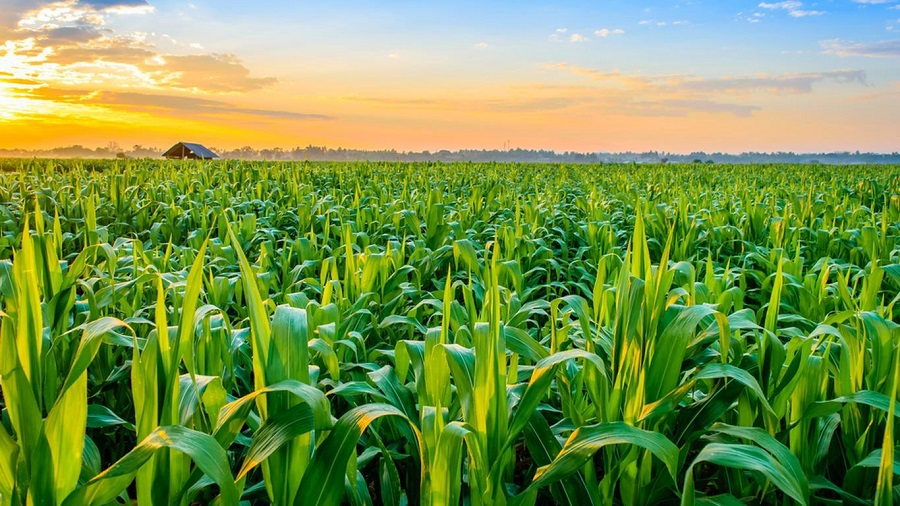 Increase in the Agriculture Crop Production Expected to Drive Philippines Agriculture Market: Ken Research