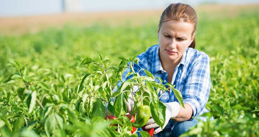 Favorable Climate Conditions Expected to Drive Kazakhstan Agriculture Market: KenResearch