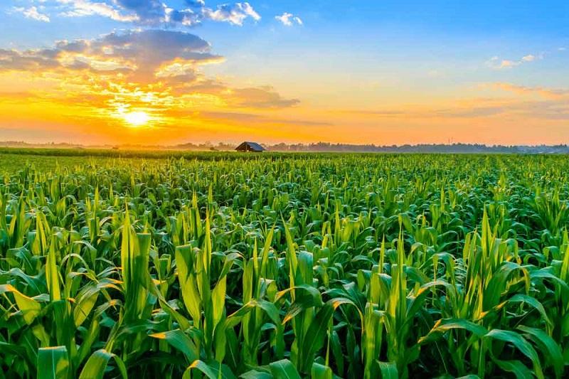 Sweden Agriculture Market, Sweden Agriculture Industry: KenResearch