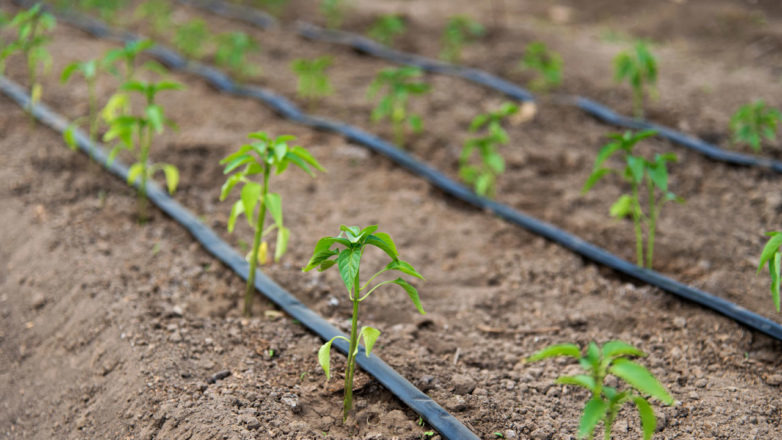 Global Drip Irrigation Market Research Report: KenResearch