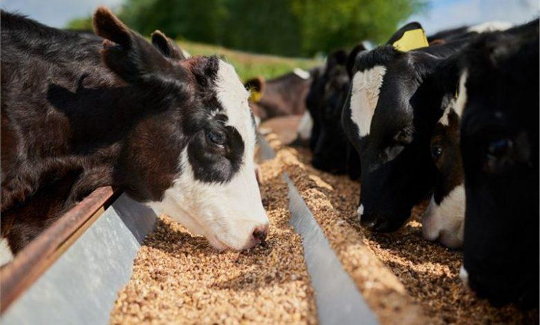 Global Feed Mycotoxin Binders And Modifiers Market: KenResearch