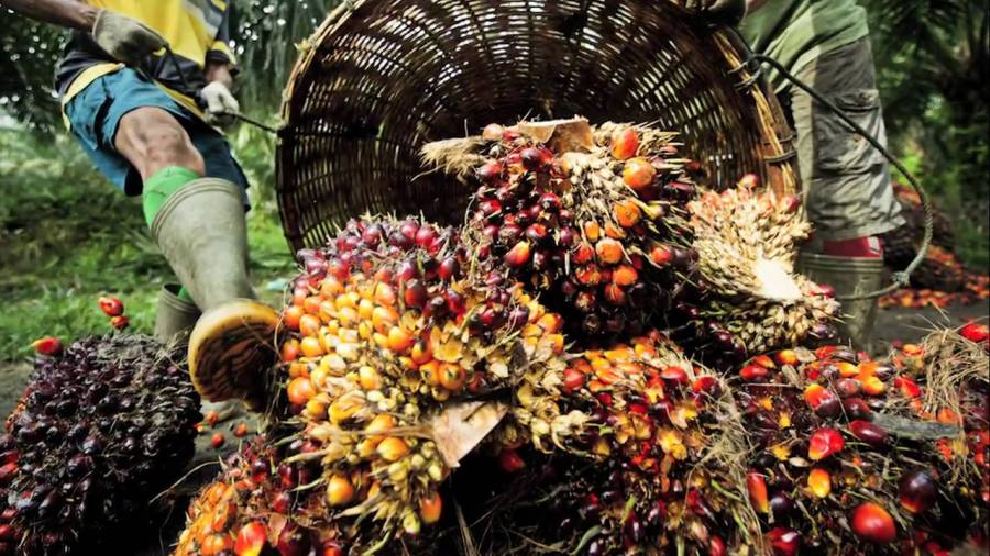 Global Sustainable Palm Oil Market Outlook: Ken Research