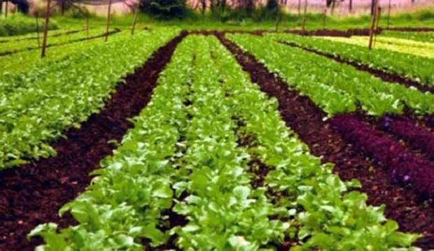 Global Organic Farming Market Research Report: KenResearch