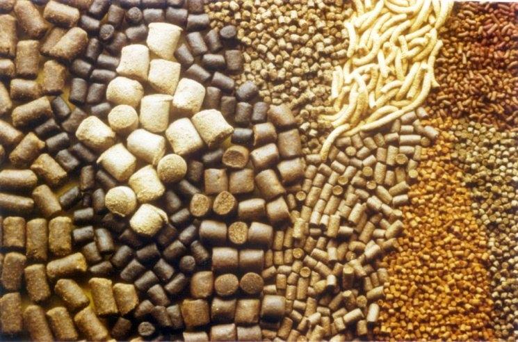 Global Animal Feed Additives Market Research Report: KenResearch