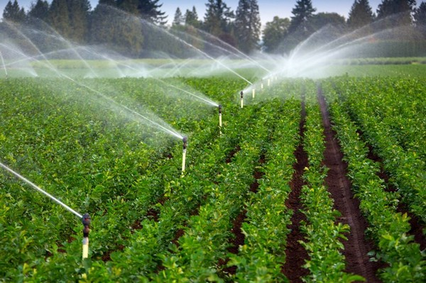 Several Initiative by Government Promote Growth of Global Irrigation Automation Industry Market Outlook: KenResearch