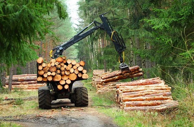 Forestry and Logging Global Market Predict to Grow Speedily: KenResearch