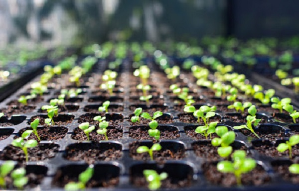 Increase in Demand from the Biofuel Sector Expected to Drive Global Seed Market: KenResearch