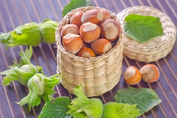 Increasing Usage of Hazelnut in Several Cosmetic Products Promoting the Growth of Global Hazelnut Market Outlook: KenResearch