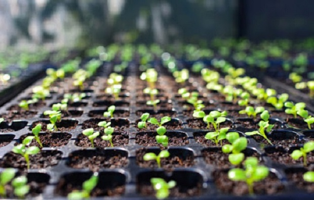 Global Seed Market Anticipate to Augment Owing to Increase in Usage of Biofules and Animal Feed: KenResearch