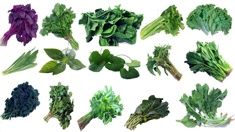 Global Seeds of Leafy Vegetable Market 2021 by Top Manufacturers, Growth, Trends, Size, Share, Analysis, Revenue and Forecast to 2027: KenResearch